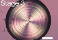 Growth Behavior of Monohydrocalcite (CaCO3·H2O) in Silica-Rich Alkaline Solution