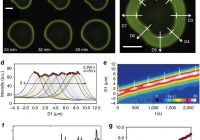 Local pH oscillations witness autocatalytic self-organization of biomorphic nanostructures