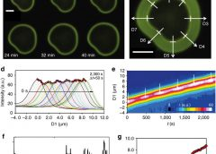 Local pH oscillations witness autocatalytic self-organization of biomorphic nanostructures