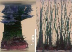 Precipitation and Crystallization Kinetics in Silica Gardens